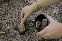 Igazi csodaszer lehet a használt teafilter a kertedben! De csak akkor, ha így használod!