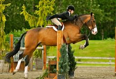 1000 Images About Horses On Pinterest Equestrian Dressage And Show Jumping