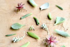 How to Grow Succulents From Cuttings (delia creates) Propogate Succulents, Succulent Cuttings, Plant Propagation, Types Of Succulents, Cacti And Succulents, Cactus Plants, Miniature Fairy Gardens, Go Green, Easy Projects