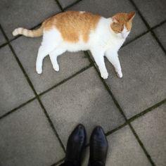 My cat:)