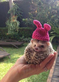 Adorable Pics To Celebrate Hedgehog Day Ready for Easter egg hunt! MoreReady for Easter egg hunt! Hedgehog Day, Cute Hedgehog, Cute Little Animals, Cute Funny Animals, Photo Chat, Tier Fotos, Cute Animal Pictures, Funny Pictures, Cute Creatures