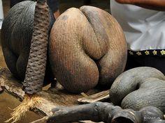 coco de mer seeds