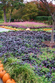 Dallas Arboretum 2011
