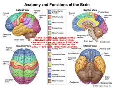 In this diagram it shows the different parts of the brain, as well as the functions they perform. For example, the cerebellum helps coordination, and the frontal lobe helps motor functions, or moving muscles.