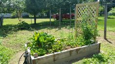 We are growing in Freehold!  This #organic #garden include: chard, spinach, sweet peas, eggplant and tomatoes - yum!