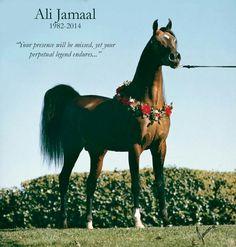 Ali Jamaal