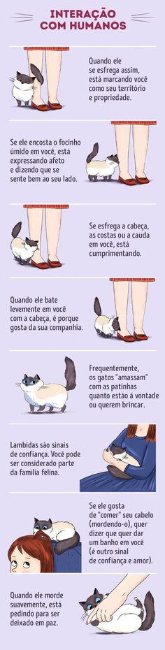 to Find a Common Language With Your Cat Cats have their own language, and if you manage to learn it you will be rewarded!Cats have their own language, and if you manage to learn it you will be rewarded! Cute Cats, Funny Cats, I Love Cats, Cat Info, Cat Behavior, Behavior Plans, All About Cats, Cat Facts, Cat Health