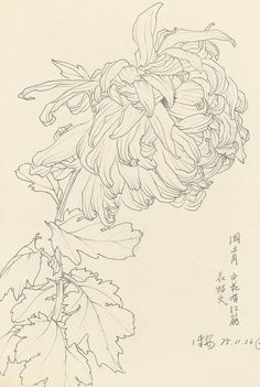 New tattoo flower blackwork embroidery patterns Ideas Botanical Drawings, Botanical Art, Botanical Illustration, Illustration Art, Art Sketches, Art Drawings, Illustration Botanique, Plant Drawing, Floral Illustrations