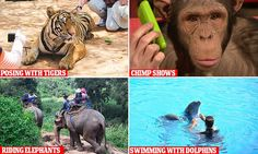 The dark side of the animal tourism industry revealed