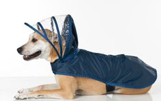 Dog Raincoat  Navy Blue  Rainbow Line by PushPushi on Etsy, $39.95  I am dead serious.