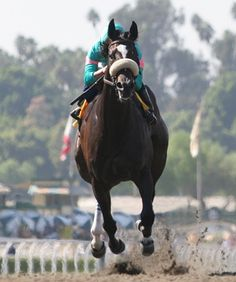 Sports Illustrated Top 10 Female Race Horses of All Time: #1 is Zenyatta (b.2004) Zenyatta also had a near-perfect racing record of 19 wins in 20 starts (20:19-1-0) and was named the American Champion Older Female Horse 2008, 2009 and 2010 and was American Horse of the Year in 2010. Zenyatta was the first female horse to win the Breeder's Cup Classic, and is considered to be one of the greatest racehorses of all-time.