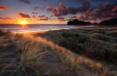 An poster sized print, approx (other products available) - Sunset at Bethells Beach, Auckland, New Zealand - Image supplied by AWL Images - poster sized print mm) made in Australia Travel Images, Travel Photos, New Zealand Image, New Zealand Landscape, Fine Art Prints, Canvas Prints, Auckland New Zealand, Poster Size Prints, Mother Nature