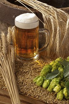 Beer is a dietary source of natural silicon, which is known to promote bone health. Silical System from Institute for Better Bone Health is an advanced bone health supplement with an organic form of silicon in the amount associated with increased bone density.