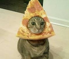 Pizza + cat = any string player's dream. Cut Animals, Animals And Pets, Funny Animals, Cute Cat Memes, Funny Cats, Cute Kittens, Cats And Kittens, Cats Bus, Happy Friday