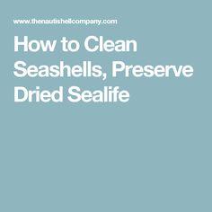 How to Clean Seashells, Preserve Dried Sealife