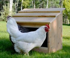 Build a nesting box for your chickens -- free plans from Ana White.