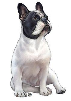 Illustrations Pets by Lucia Guarnotta, via Behance