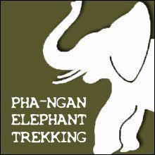 Koh Phangan Elephant Trekking... try a little #adventure at #kohphangan jungle!