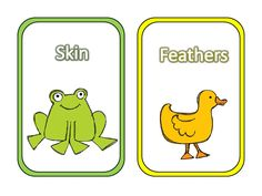 Animal Covering Cards Arctic Animals, Forest Animals, Animal Coverings, Life Science, Science Ideas, Animal Classification, Matter Science, Kindergarten Science, School Fun