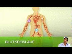 VIDEO: Was bewirkt eigentlich Herbalife – Niteworks – Nahrungsergänzung mit L-Arginin sowie Vitamin C und E