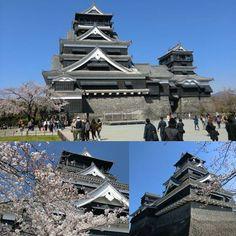 【pusan7188】さんのInstagramをピンしています。 《熊本城❗桜🌸 #城 #熊本城 #熊本 #桜 #旅行》