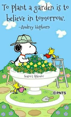 Snoopy and Woodstock Snoopy Frases, Snoopy Quotes, Charlie Brown Quotes, Charlie Brown And Snoopy, Snoopy Love, Snoopy And Woodstock, Happy Snoopy, Peanuts Cartoon, Peanuts Snoopy