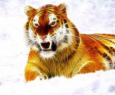 Free Image on Pixabay - Tiger, Animal, Wild, Wild Animals Free Pictures, Free Images, School Bus Conversion, Pet Tiger, Tier Fotos, Animals, Wild Animals, Random Stuff, Animales