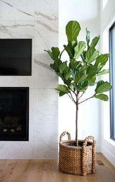 Best Indoor Plants, Fake Plants, Artificial Plants, Living Room Plants, Bedroom Plants, House Plants, Bedroom Decor, Ficus Lyrata, Rustic Bedroom Design