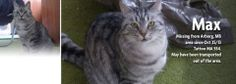 #Winnipeg Max missing from his home on Skylake Rd (west of Silver) and Chatfield (25 S SW of Arborg)! pic.twitter.com/SxaZZoc0aC
