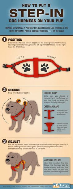 From Kurgo: How to Put on a Step-in Dog Harness