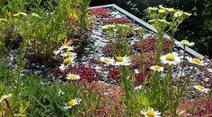 Fiche technique : Tout sur... Les toits végétalisés!