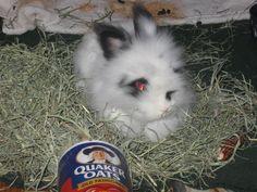 Look at my sweet boy in his hay pile...