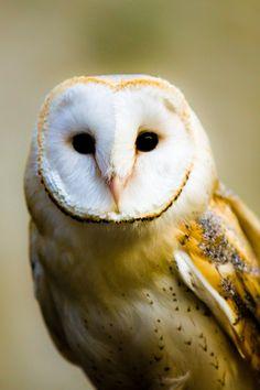 Owl by David Heaton