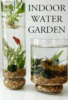 Water plants and unique bowl designs for Betta fish aquariums