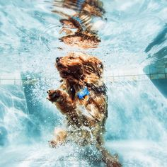 Underwater Dogs – by Animal Photographer Seth Casteel