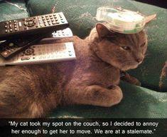 Pretty funny cat!  ;)