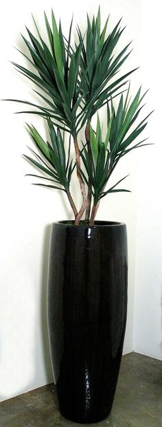 PL1027* Green Yucca Plant (Container sold separately)