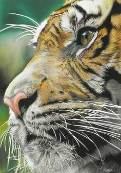 Tiger Pastel - Face Of The Hunter by Paul Miners Big Cats Art, Cat Art, Wildlife Paintings, Wildlife Art, Beautiful Cats, Animals Beautiful, Grand Chat, Tiger Artwork, Tiger Drawing