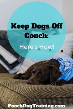 Doggie keeps jumping on the couch and you feel bad for saying no? Trying to keep your dog off the couch but nothing seems to be working? Pitbull Training, Puppy Obedience Training, Basic Dog Training, Training Your Puppy, Training Dogs, Puppy Training Schedule, Dog Training Classes, Keep Dog Off Couch, Dog Furniture