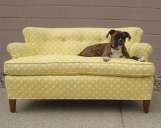vintage couch, Retro Wanderlust, I want this in my house (the couch and the dog)! Boxer And Baby, Boxer Love, Dream Furniture, Cool Furniture, Take A Seat, Love Seat, Yellow Couch, Vintage Sofa, Barbie Dream