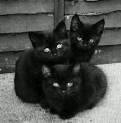 3 black kittens were born in Chloe's bathroom once (She named them: Blackie, Blackberry, and Black America)