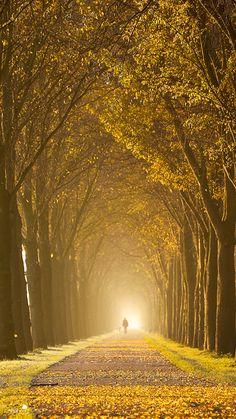 Gold Lane by *LarsVanDeGoor