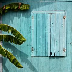 color pattern, wood, blue, green, palm tree, photography,