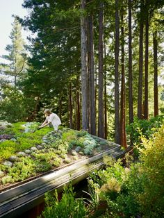 Artist Studio overlooks Guest Cabin with Rooftop Garden DIY green roof, Mill Valley Cabins, Mill Valley Landscape Architecture, Landscape Design, Garden Design, Sustainable Architecture, Pavilion Architecture, Residential Architecture, Sustainable Environment, Architecture Interiors, Sustainable Design