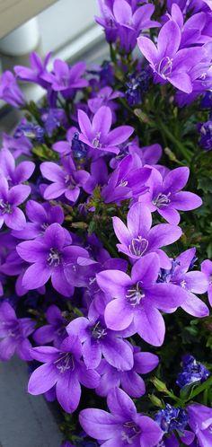 3133 Best Purple Love Images Purple Love Purple All Things Purple