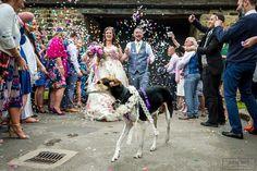 Brooke & Simon's beautiful colourful wedding