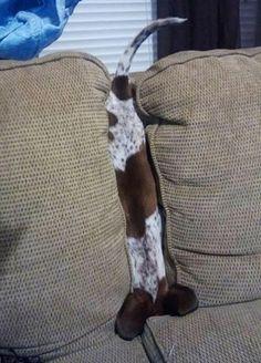 House Pets vs. Human Furniture: The Ultimate Battle