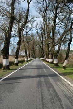 Typical Alentejo road - Portugal