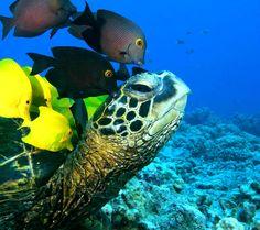 sea animals - Google zoeken