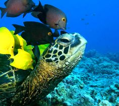 Sea animal,sea animals,marine animal,marine animals,sea turtle,sea ...960 x 854 | 134.5 KB | services.flikie.com